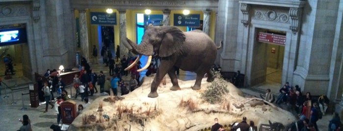 Dinosaurs/Hall of Paleobiology Exhibit is one of 36 hours in...Washington DC.
