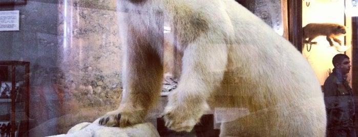 Музей Арктики и Антарктики is one of СПб — музеи и интересные места.