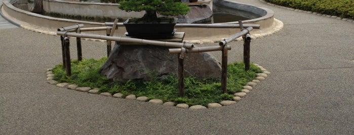 Omiya Bonsai Art Museum, Saitama is one of Attractions to Visit.