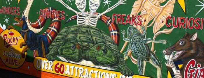 Freak Show Circus is one of Nikki Kreuzer's Offbeat L.A..