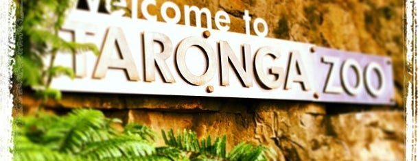 Taronga Zoo is one of Great Family Holiday Attractions Around Australia.