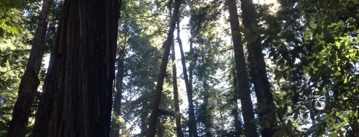 Henry Cowell Redwoods State Park is one of Beyond the Peninsula.