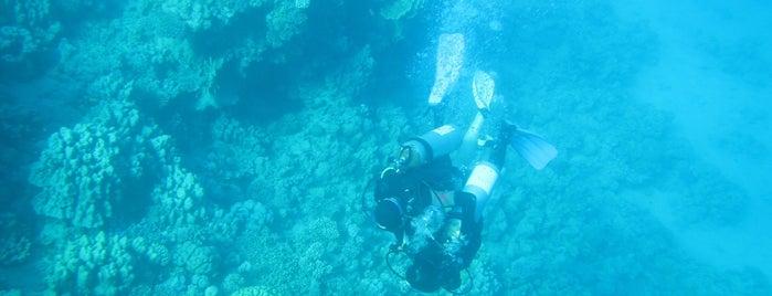 Ras Bob Dive Site is one of Be Charmed @ Sharm El Sheikh.
