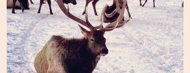 National Elk Refuge is one of Jackson.