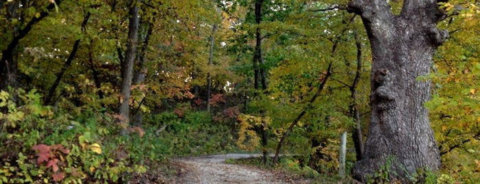 Springbrook State Park is one of Iowa: State and National Parks.