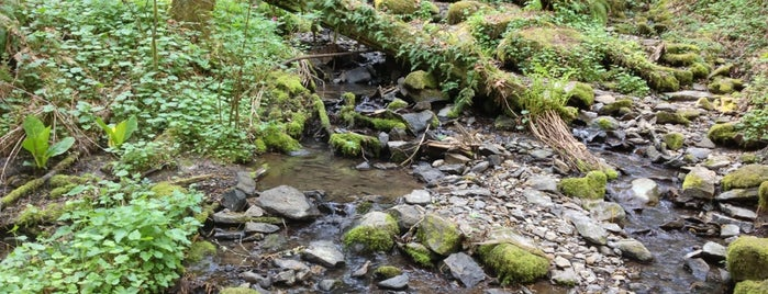Tryon Creek State Park is one of Portland (To Try).