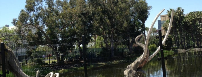 La Brea Tar Pits & Museum is one of USA Trip 2013 - The West.