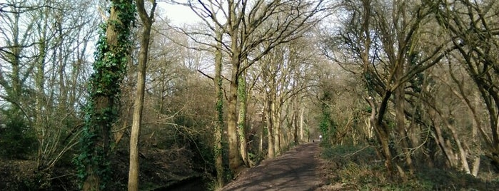 Beverley Brook Walk is one of To Do.
