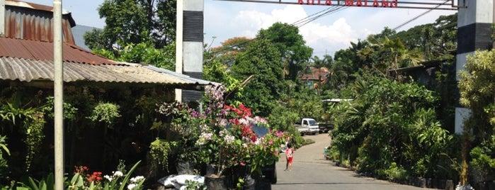 Pasar Burung Kota Malang is one of must to visit in malang city.