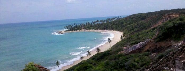 Praia de Coqueirinho is one of Brasil.
