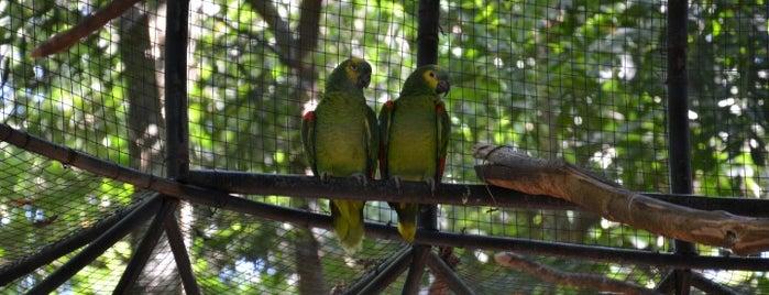 Zoológico Bosque Guarani is one of Lista Pessoal.