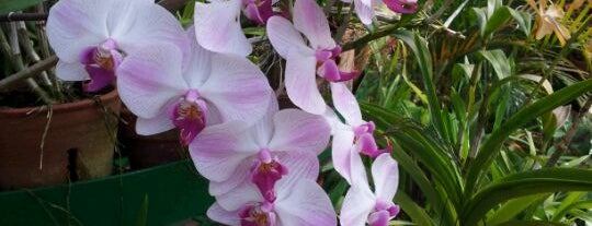 Royal Botanic Gardens is one of Trips / Sri Lanka.