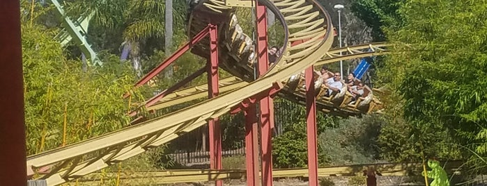 Cobra is one of ROLLER COASTERS.
