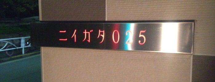 ニイガタ025 is one of Nakameguro.
