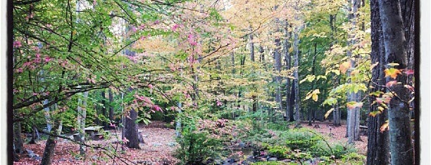Ringwood State Park is one of NJ To Do.