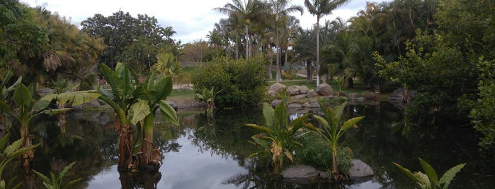 Palmetum is one of Turismo por Tenerife.