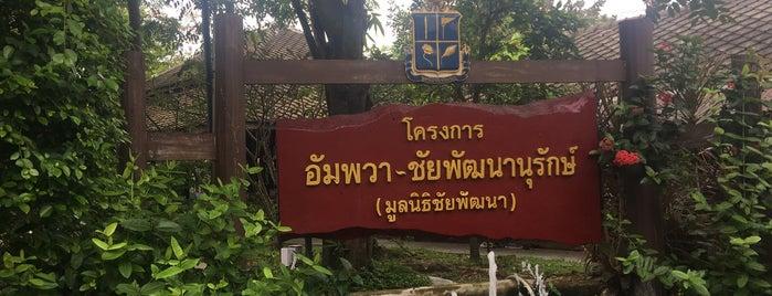 อัมพวา ชัยพัฒนานุรักษ์ is one of ครัวคุณต๋อย 2557.