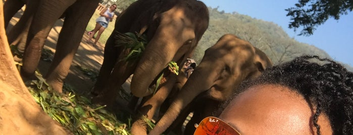 Elephant Nature Park is one of Attractions to Visit.