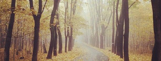 Парк «Покровское-Стрешнево» is one of парки сао.
