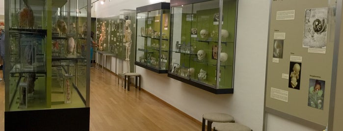 Anatomisches Museum is one of Gratis ins Museum.