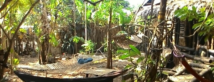Bamboo Nest is one of accommodation.