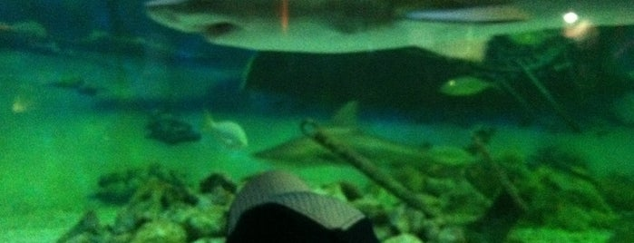 Jenkinsons Aquarium is one of Kid Stuff.