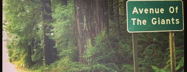 Avenue of the Giants is one of Humboldt County.