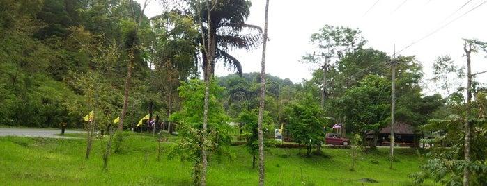 ต้นเต่าร้างยักษ์ is one of ลำพูน, ลำปาง, แพร่, น่าน, อุตรดิตถ์.