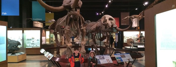 University of Michigan Museum of Natural History is one of Ann Arbor bucket list.
