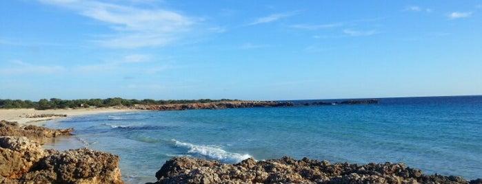 Playa de Son Xoriguer is one of sport & beach.