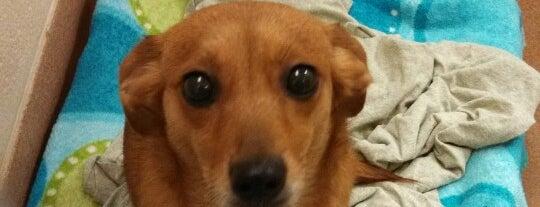 Eri dog humane society of northwestern pennsylvania is one of eri dog solutioingenieria Images