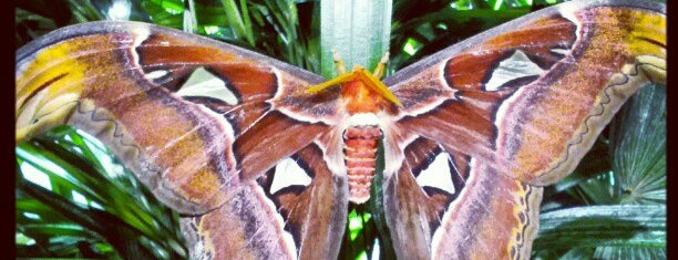 The Butterfly Conservatory at the American Museum of Natural History is one of istiyorumgidicem!!.