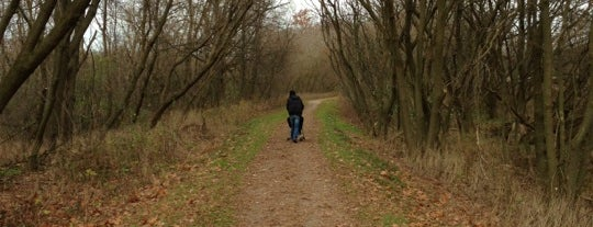 Hamilton To Brantford Rail Trail is one of Outdoors.