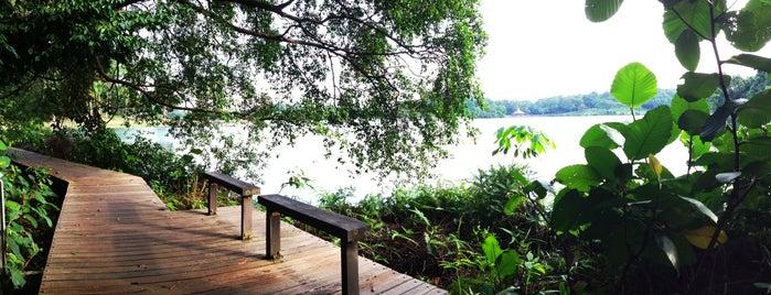 Prunus Trail is one of Trek Across Singapore.