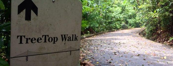 Peirce Track is one of Trek Across Singapore.