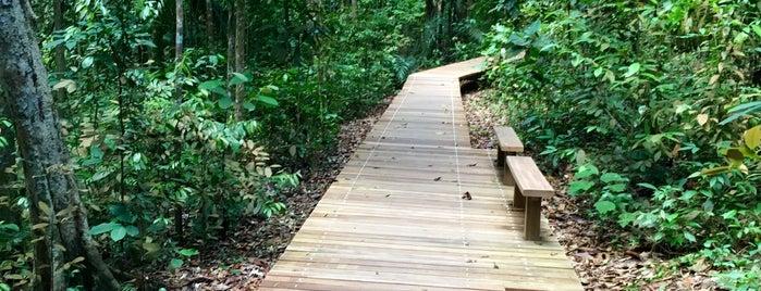 Hevea Trail is one of Trek Across Singapore.