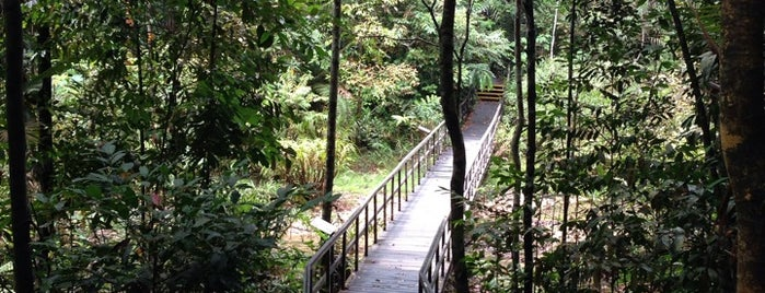 Central Catchment Natural Reserve (CCNR) is one of Trek Across Singapore.
