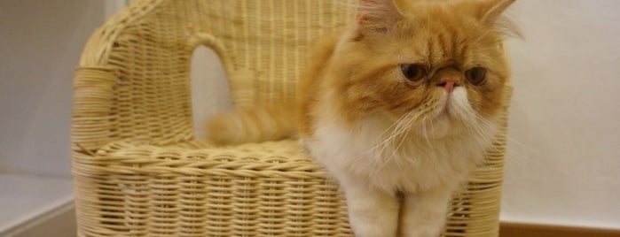Purrfect Cat Cafe (貓之屋) is one of Penang To Eat.