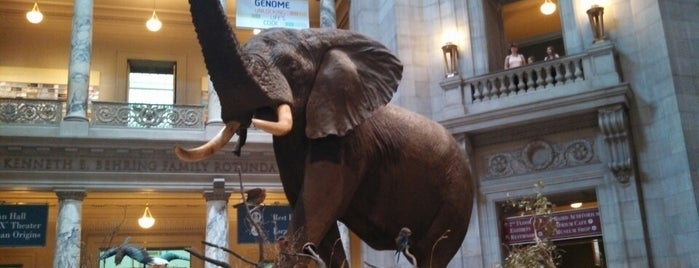 National Museum of Natural History is one of Museums and Art Galleries.