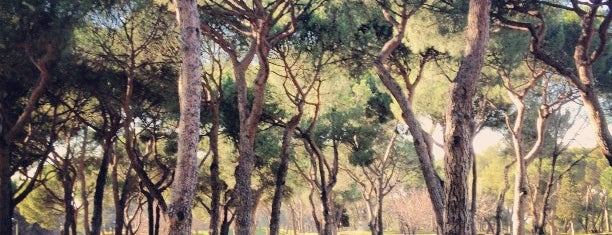 Parque Dehesa de la Villa is one of Madrid.