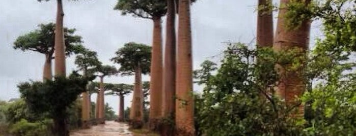 Allée des Baobabs | Avenue of the Baobabs is one of Attractions to Visit.