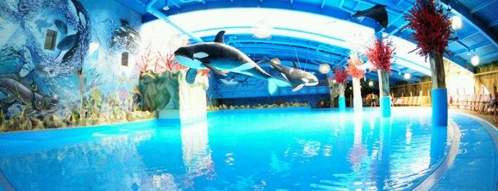 Аквапарк «Dream Island» is one of В 2014му.