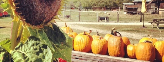 The Little Farmer Orchard and Farm Market is one of Jeanne's Check-ins.