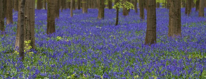 Hallerbos is one of Re-discover Europe 2014.
