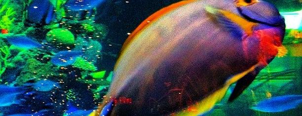 Silverton Aquarium is one of Las vegas.