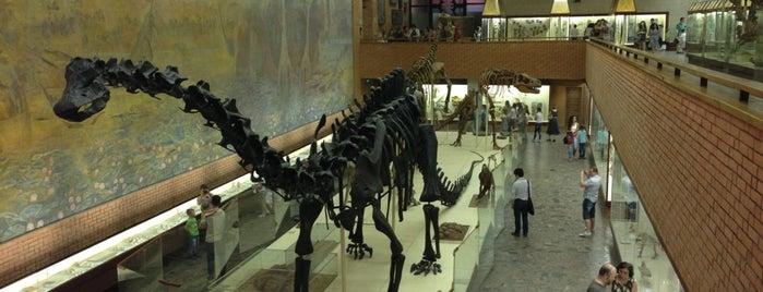 Палеонтологический музей РАН is one of культУРА.
