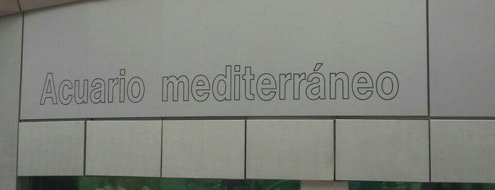 Acuario Mediterráneo is one of Alicante urban treasures.
