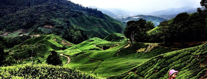 Puncak Gunung Brinchang is one of malaysia/KL.