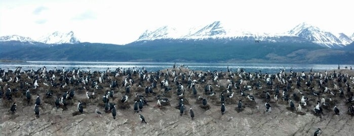 Isla de los Cormoranes is one of Patagonia (AR).