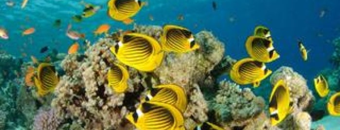 Blue Hole Dive Site is one of Be Charmed @ Sharm El Sheikh.